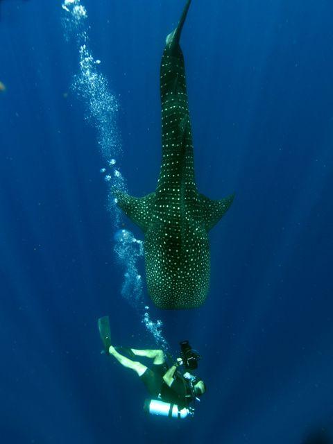 Amazing #underwater