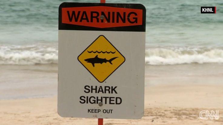 Pánico En Playas De Hawai Por Dos Ataques De Tiburón