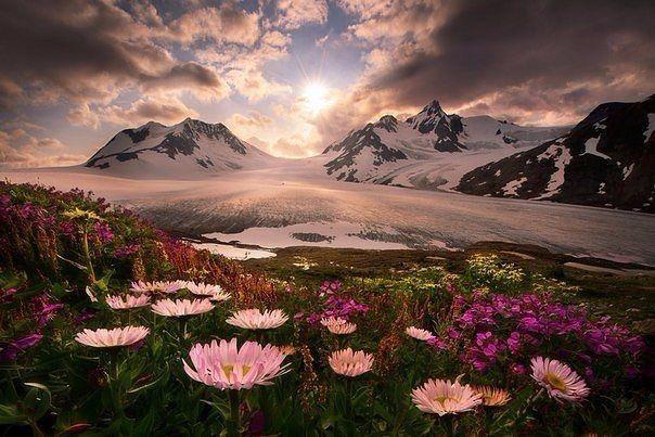 Цветы у подножия гор, Аляска. / Speleologov.Net - мир кейвинга