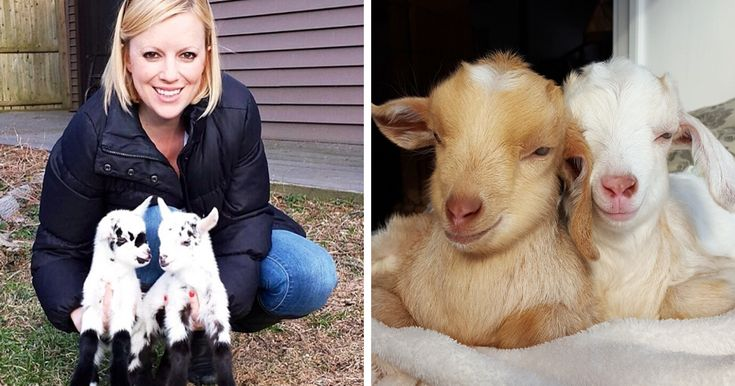 Woman Quits Stressful City Job To Raise Special Needs Baby Goats, Loves Every Minute Of It | Bored Panda