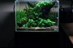 http://aquaticmag.com/freshwater/23-easy-to-grow-low-light-plants-for-your-aquarium/