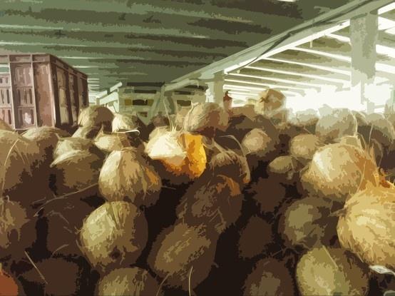 """""""El barco con cocos"""" buuu.."""