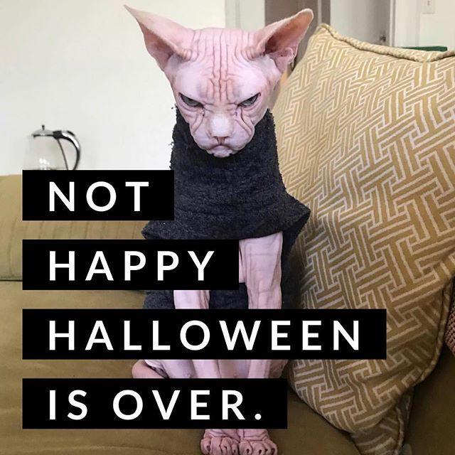 The Day After Halloween Face Halloween Comeback Halloweenwithdrawls Morehalloweenfun Besttimeoftheyear Bringhal Support Animal Halloween Halloween Face