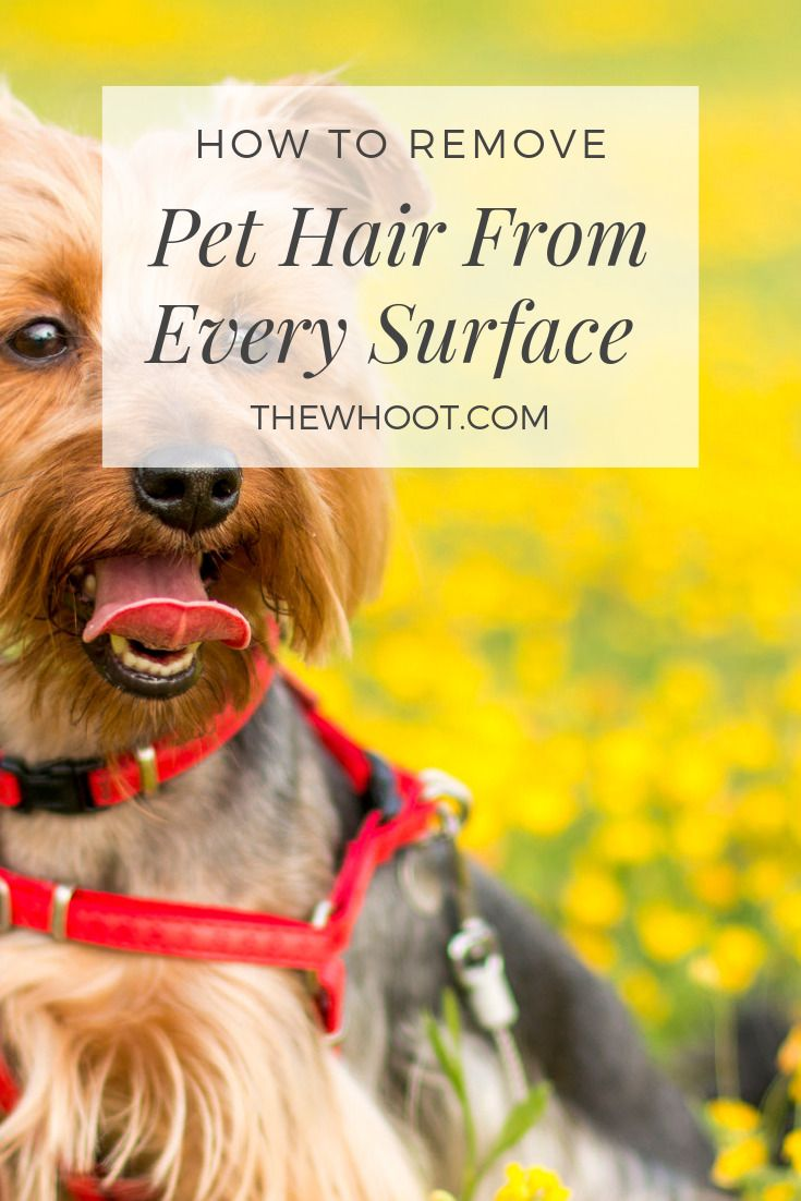 How To Remove Pet Hair From Every Surface Pet Hair Removal Pets