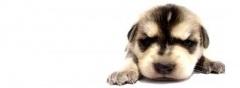 puppy trainingPuppies Stuff, Legs Friends, Adorable Ideas, Potty Training, Puppies Training, House Training, Puppy Training