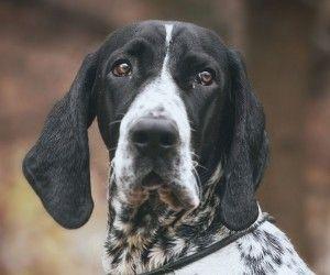 Dog Humane Society English Mississauga