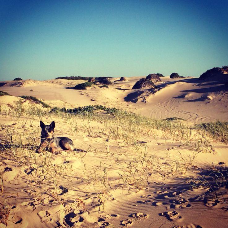 Samantha's Photography - Hawks Nest Beach