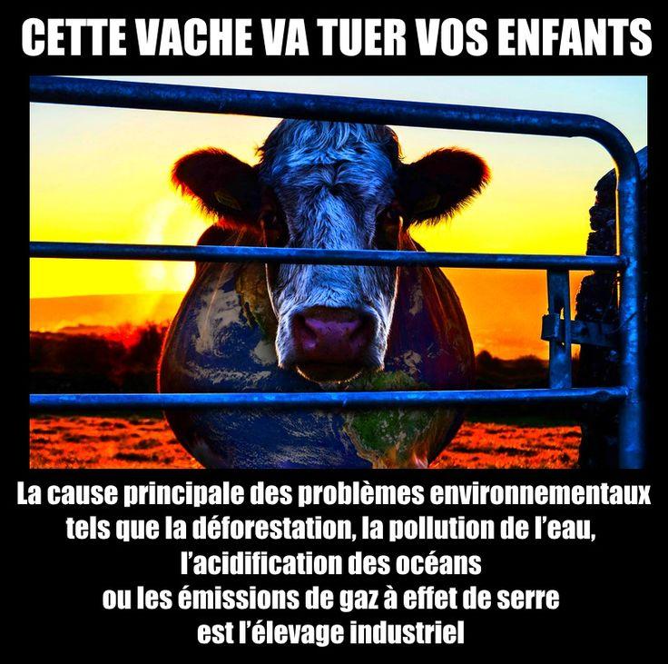 Le film s'avère être un électrochoc pour les écologistes convaincus que leurs actions quotidiennes suffisent à lutter contre les maux de la planète alors que ces problèmes se résoudraient drastiquement si nous cessions de faire vivre l'industrie de l'élevage intensif en mangeant moins, mieux, voir plus du tout de viande industrielle.