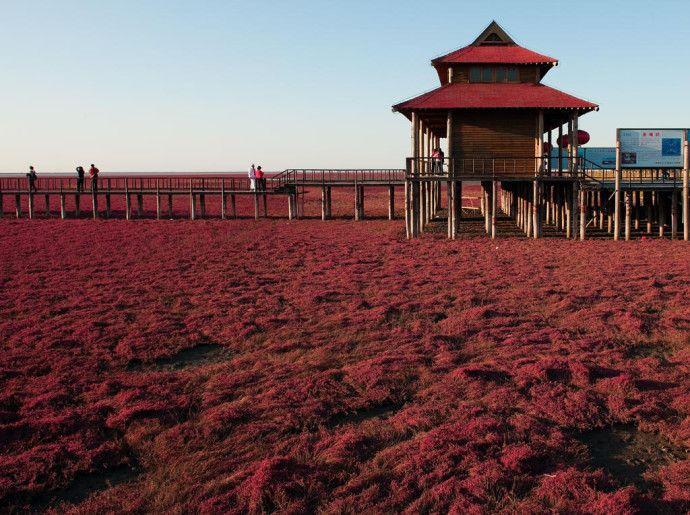 """RedBeachChina1  Na China, a Red Beach (isso mesmo, """"praia vermelha""""), na província de Panjin, fica de tal forma coberta de algas que o cenário por vezes parece uma pintura. Mas não se deixe enganar – ela existe mesmo e os turistas fazem questão de a visitar."""