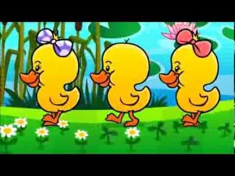 Piosenka dla dzieci Kaczuszki,Kaczuchy