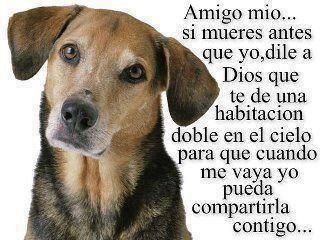 Imagen de Amistad de Perros con Bonito Mensaje - Imagenes con Frases, Fotos y…