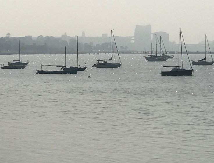 Foggy Morning on Bay