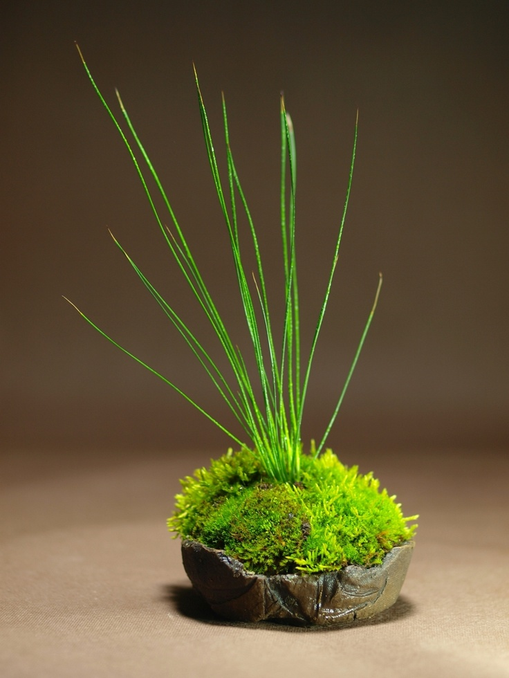 kusamono— a form of Japanese bonsai arrangement in which plants sprout from low-profile balls of moss.