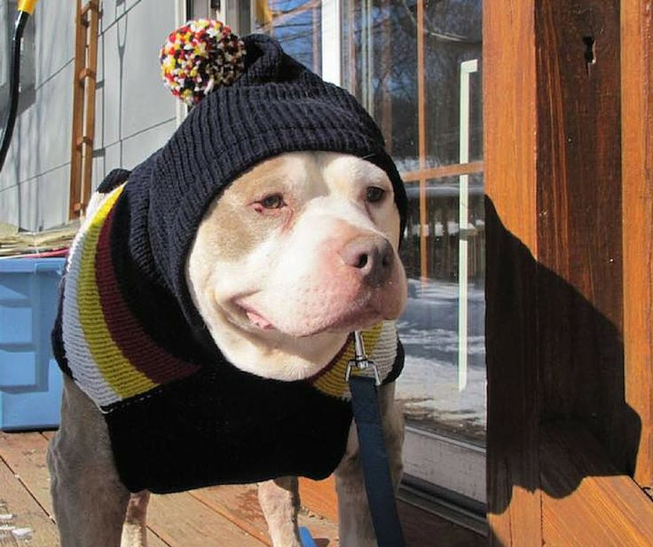 DOLLY HEROES Biscuit was able to experience a happy end to his life thanks to Foster Dogs NYC. They run a Hospice program for shelter dogs, which gives elderly and terminally ill dogs comfort, love, and care in their final months ❤ Dolly https://www.facebook.com/TaoOfDolly