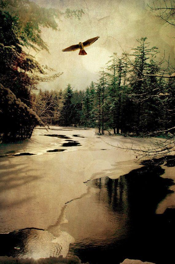 Adirondack Hawk - a hawk flying over a winter lake