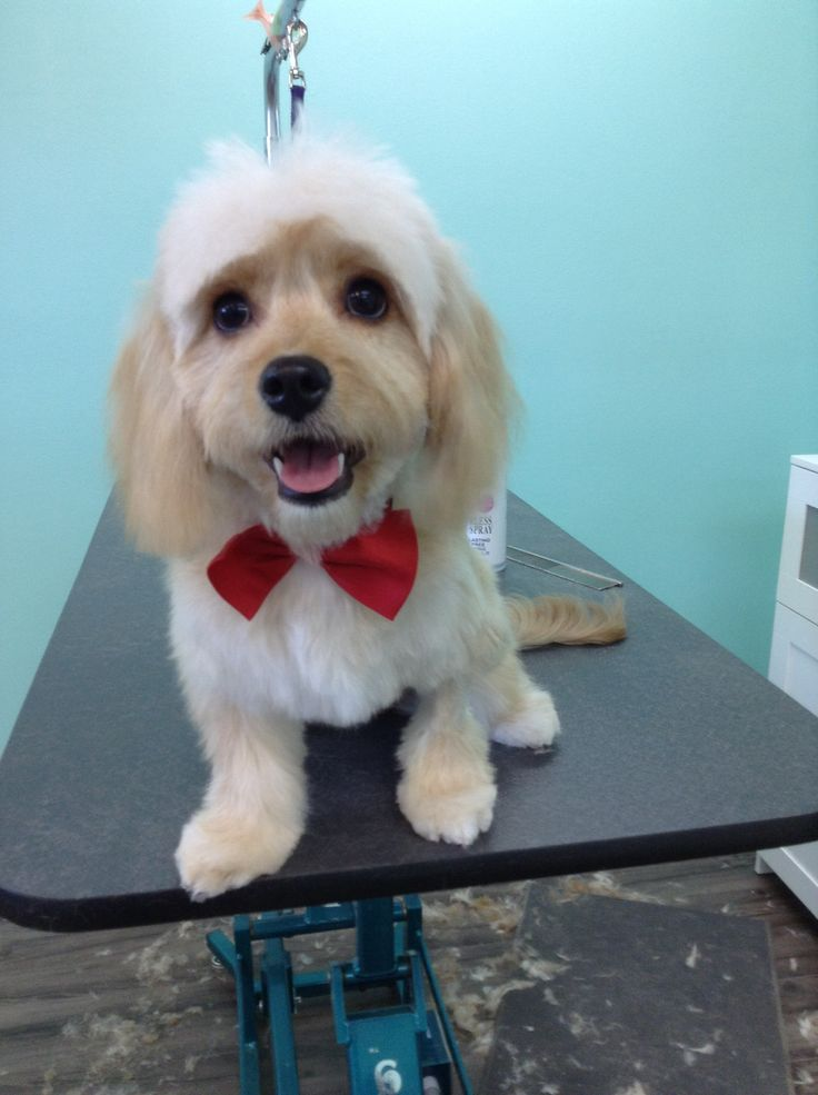 15 best community giving the upscale tail dog groomers naperville feb 2014 is national wear red day in honor of the fight against heart disease in womenus the upscale tail pet grooming salon naperville solutioingenieria Choice Image
