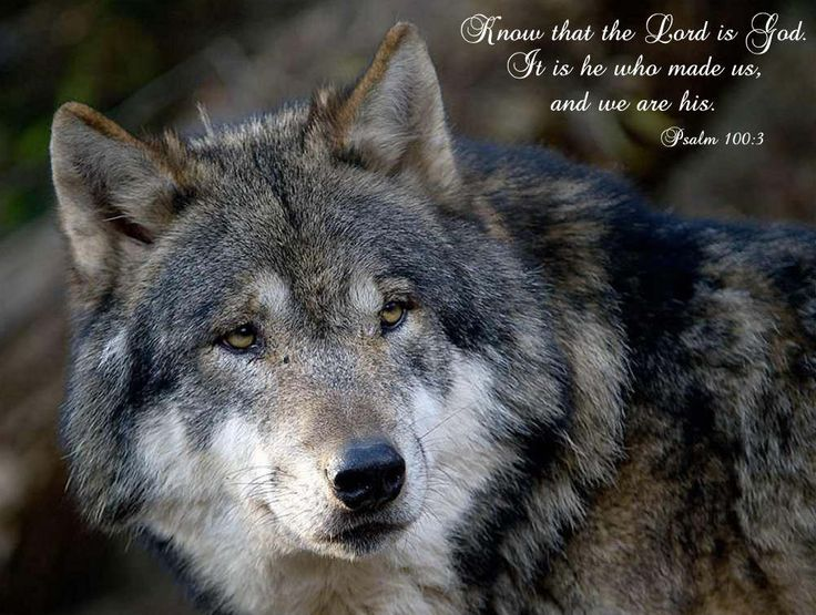 peace_romans12_zpsc88cb406.jpg Photo:  This Photo was uploaded by biblequotedpics. Find other peace_romans12_zpsc88cb406.jpg pictures and photos or uploa...