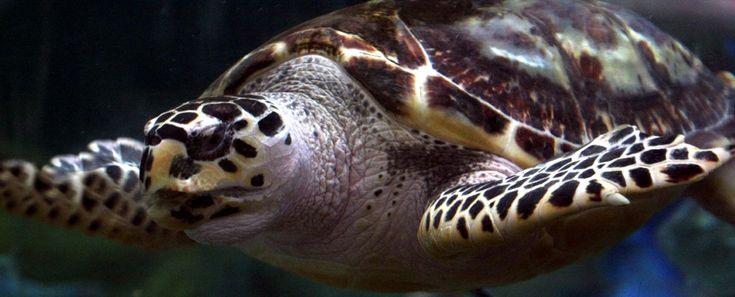 Hours & Prices in 2020   Dallas world aquarium, Pet cam ...