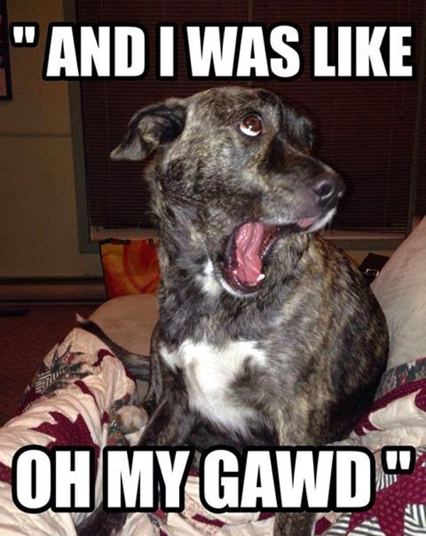 """And I was Like OH MY GAWD"" funny dog meme Funny Dogs,"