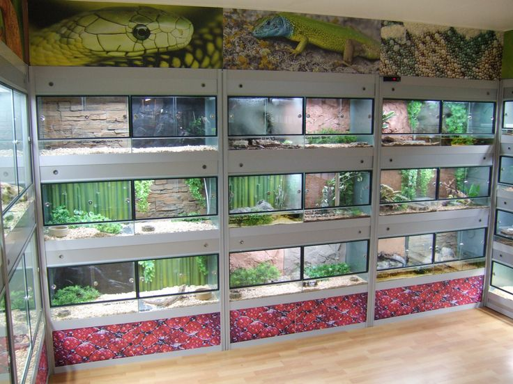 reptile room - Google Search