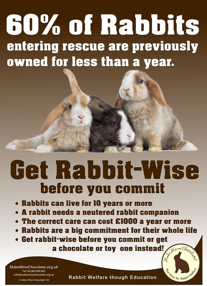 Don't get an animal if you are not committed to keeping it for its whole life!