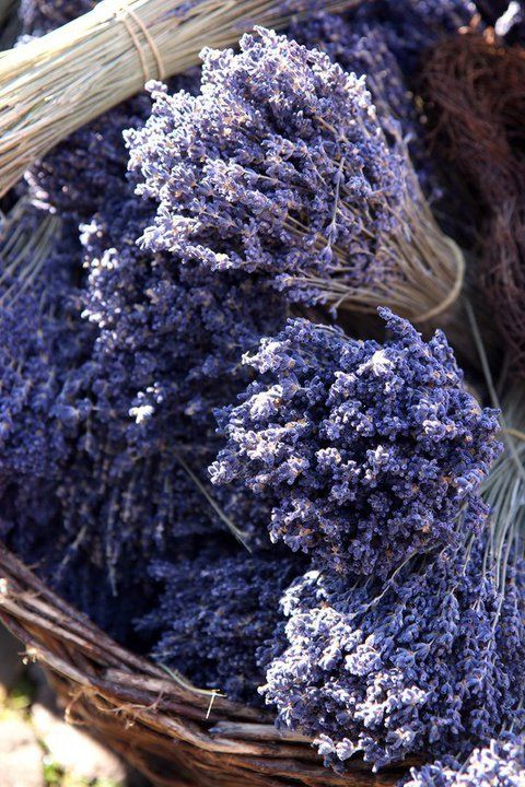 *~The essence of lavender