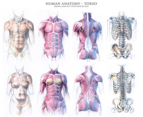 102 Best Cr B Human Anatomy Images On Pinterest Human Anatomy
