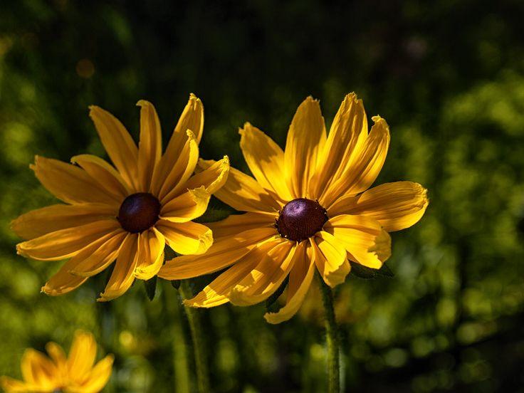 Цветы в Грибановском саду. #фотографиринамайсова #irinamaysova #photomira #flowers #naturalhair