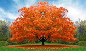 autunno immagini - Cerca con Google