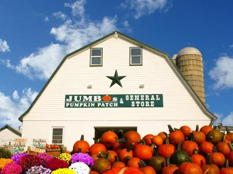 Jumbo's Pumpkin Patch, Middletown, Maryland : Top 10 U.S. Pumpkin Patches : TravelChannel.com