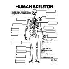 Anatomía Colorear el sistema esquelético