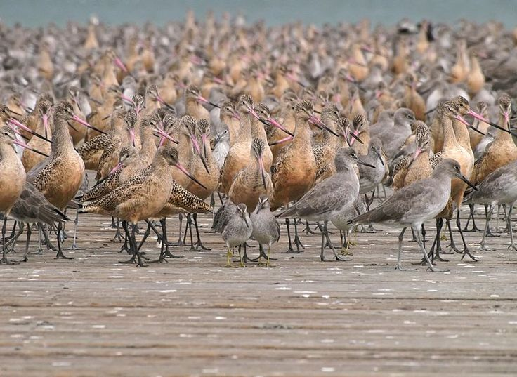 UC Berkeley Study Says Migratory Birds Use Infrasound to Avoid Storms