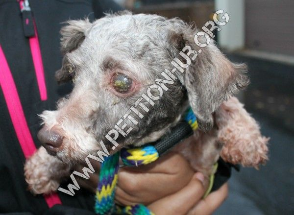 Severe Punishment for Elam Beiler! Man That Neglected 10 Dogs And Ran An Unlicensed Puppy Mill! | PetitionHub.org