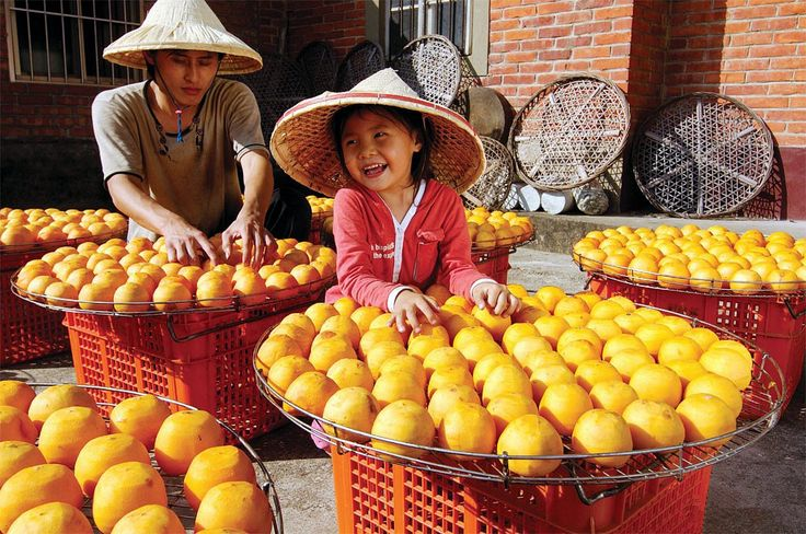 Persimmon harvest season in the Gongcheng County of Guilin,China. https://twitter.com/Beautifulgx