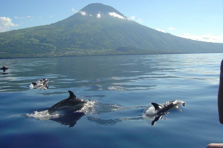 O Mar em redor dos Açores é dos mais ricos do Oceano Atlântico, mas pode-se encontrar o atum, o tubarão (em várias espécies), a moreia, o peixe-espada e o chicharro. O Cachalote Visitar página