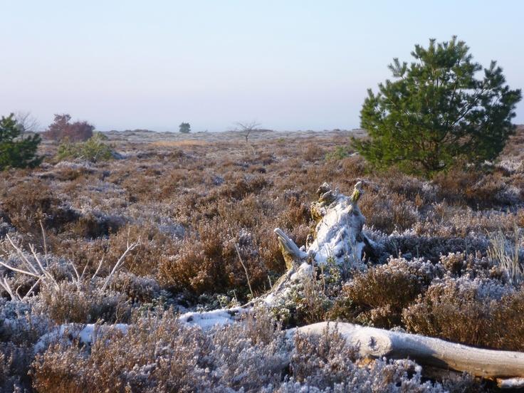 2013-01 Wintermorgen op de Sprengenberg