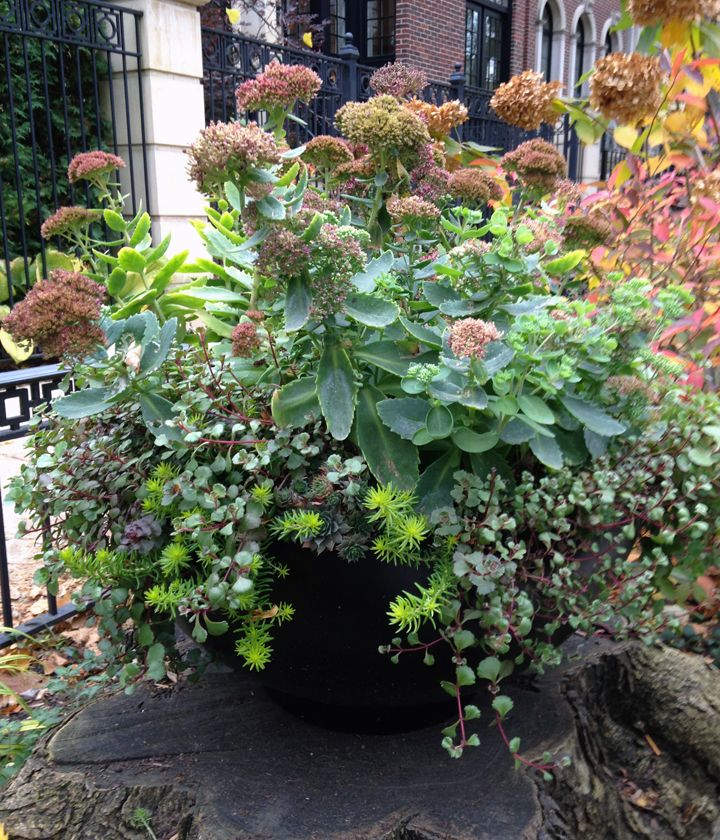Fall | Succulents | Planter | Container | Parkway | Tree Stump | Urban | Garden | Landscape ...