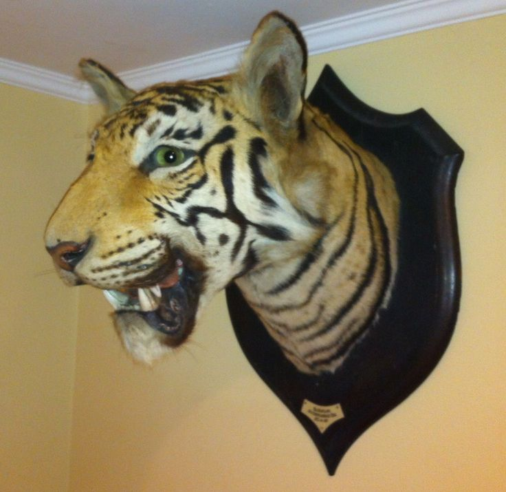 1000+ Images About Taxidermy Emporium Tigers On Pinterest