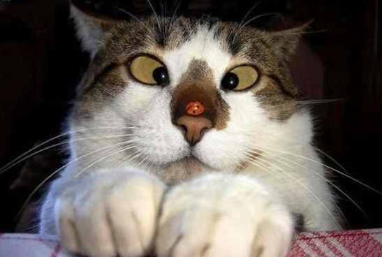 Kedi Oyunları birçok sitede yerini korumaktadır. Yaşantımızın en sevilen hayvan türlerinden biri haline gelen kediler ile birçok maceranın içine kendinizi atabileceksiniz. İstediğiniz performansınızı sahaya koyup puan gelirlerinin tamamını elinize almayı amaçlayacaksınız. Herkes tarafından beğenilerek takip edilen bu sistem oyunlarımız ile birçok düşman hayvan seçimleri ile karşı karşıya kalabilirsiniz. http://www.barbieoyunlar.net.tr/kedi-oyunlari.htm