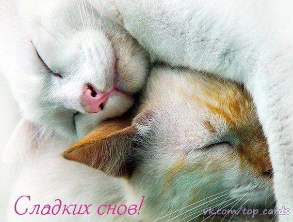 Рисунки, картинки спокойной ночи сладких снов любимый котик