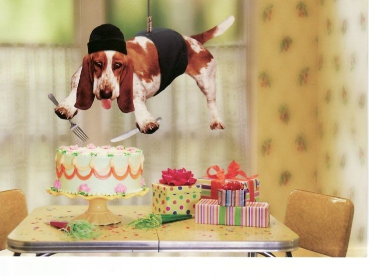 funny happy birthday dog cake-#7