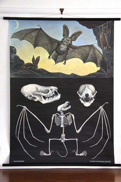 Bat Zoological Wall Chart design by Empirical Style