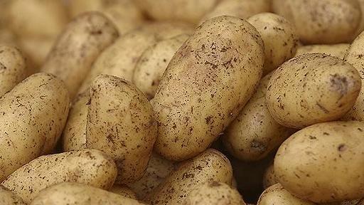 Mashed Potatoes- Tim Malzer
