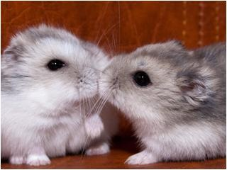 hamsters, the one on the left looks like my female hamster pup.