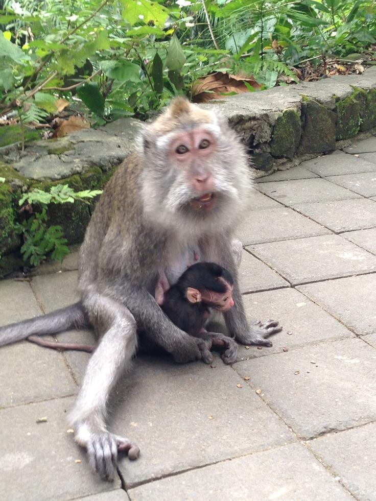 Monkey Forest Bali, Indonesia