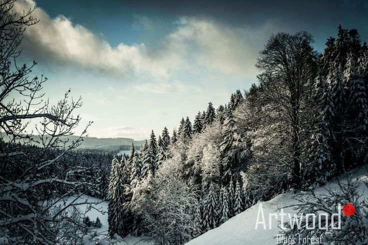 Schwarzer_weiser_Weißer_Wald