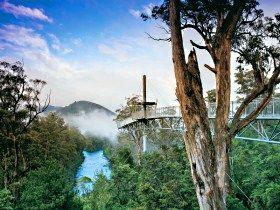 Tahune Forest Airwalk, Tasmania