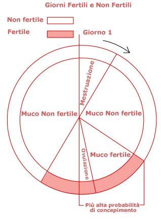 Correlazione muco e giorni fertili - Esseredonnaonline
