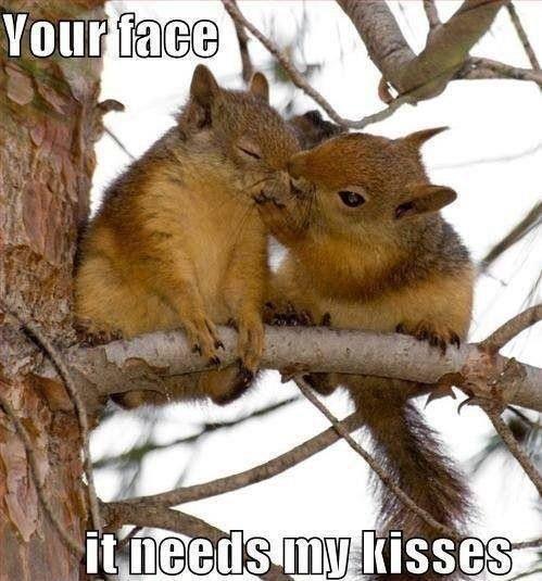Aw hehe squirrel romance ;p