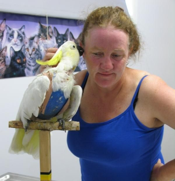 The Bird Vet Melbourne Offers Medical Care Hospital Care